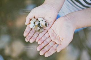 子供の汚れた手の写真・画像素材[1502839]