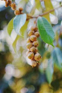 秋の実の写真・画像素材[1502840]