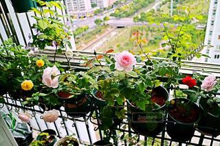 テーブルの上の花の花瓶の写真・画像素材[1508530]