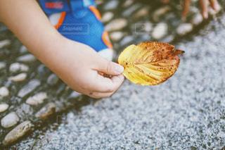 秋を知るの写真・画像素材[1508578]