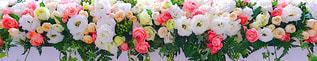 花の写真・画像素材[1566201]
