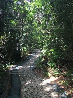沖縄の写真・画像素材[48805]
