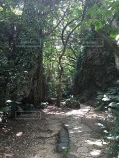 沖縄の写真・画像素材[48825]