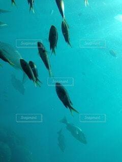 海の写真・画像素材[56635]