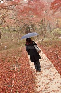 秋の路の写真・画像素材[1489537]
