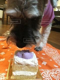 犬の写真・画像素材[49293]