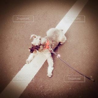 犬の写真・画像素材[58077]