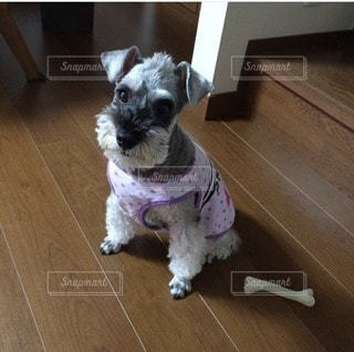 犬の写真・画像素材[58927]