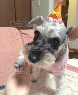 犬の写真・画像素材[58941]