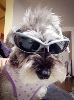 犬の写真・画像素材[58957]