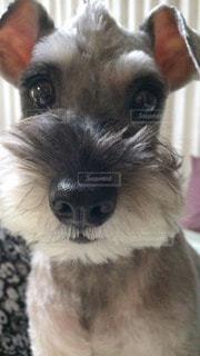 犬の写真・画像素材[58968]