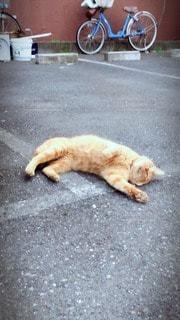 猫の写真・画像素材[59236]
