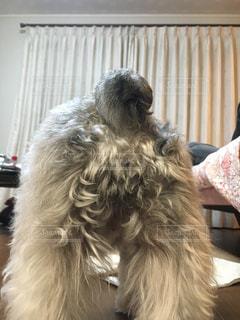 犬の写真・画像素材[838391]