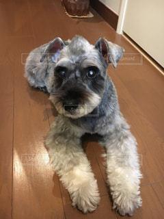 犬の写真・画像素材[838393]