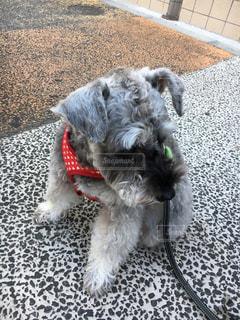 犬の写真・画像素材[838397]