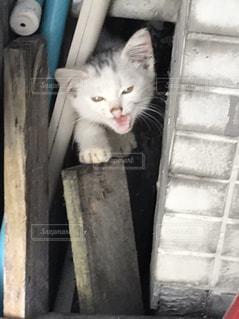 木製のドアの上に座っている猫の写真・画像素材[1490356]