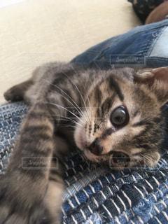 青い毛布の上に横たわる猫の写真・画像素材[1489149]