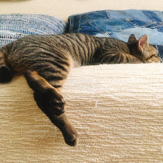 敷物の上に横たわる猫の写真・画像素材[1489155]
