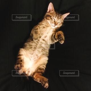 子猫の写真・画像素材[1489547]