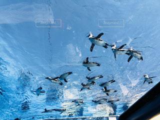空を飛んでいるペンギンの写真・画像素材[1489278]