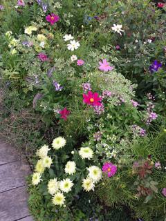 植物にピンクの花の写真・画像素材[1531628]