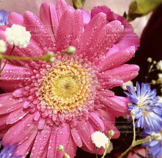 近くの花のアップの写真・画像素材[1522884]