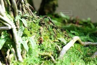 お花畑の写真・画像素材[50671]