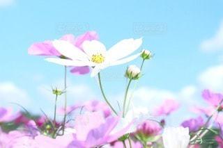 花の写真・画像素材[50673]
