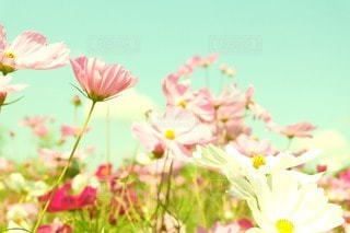 花の写真・画像素材[50679]