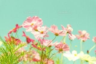 花 - No.50681