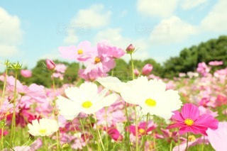 花の写真・画像素材[50692]