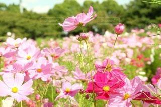 花の写真・画像素材[50693]