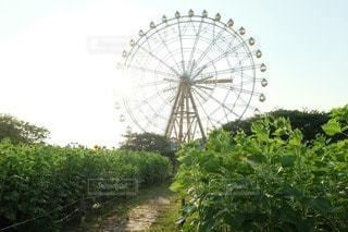 夏の写真・画像素材[50726]