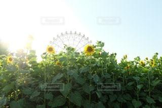 夏の写真・画像素材[50729]