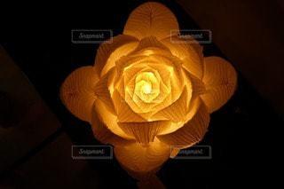 花の写真・画像素材[50803]