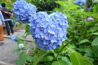 花の写真・画像素材[71948]