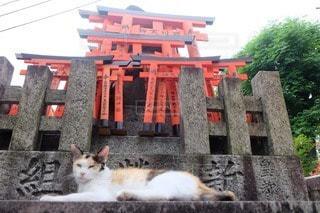 猫の写真・画像素材[71955]