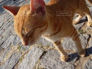 猫の写真・画像素材[148679]