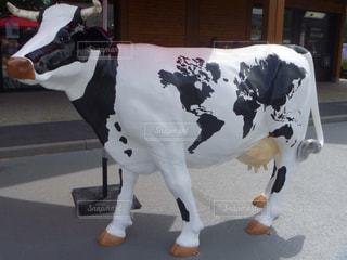 牛の写真・画像素材[148681]