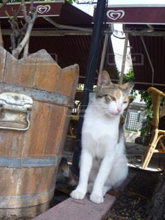 猫 - No.148696