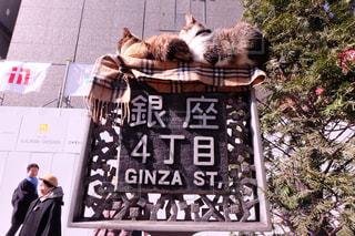 猫の写真・画像素材[148750]