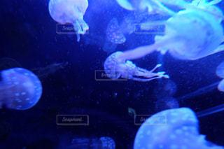 水族館の写真・画像素材[148786]