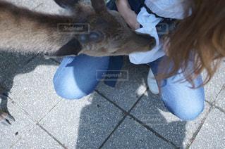 鹿の写真・画像素材[536247]