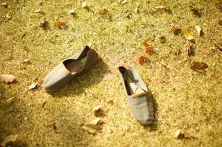草の部分の写真・画像素材[1101922]