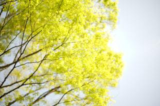 近くの木のアップの写真・画像素材[1101952]