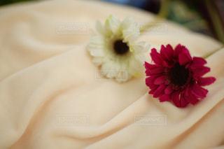 近くの花のアップの写真・画像素材[1101955]