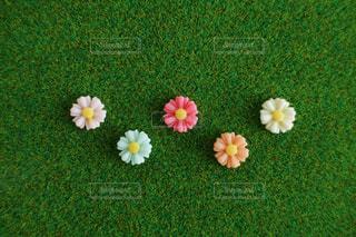 お花の写真・画像素材[1185589]