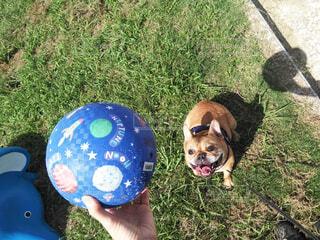 ボール狂の犬の写真・画像素材[1630136]
