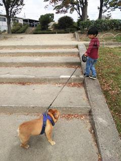 子どもと犬の散歩の写真・画像素材[1630140]