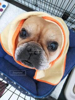 犬の冬支度の写真・画像素材[1630142]
